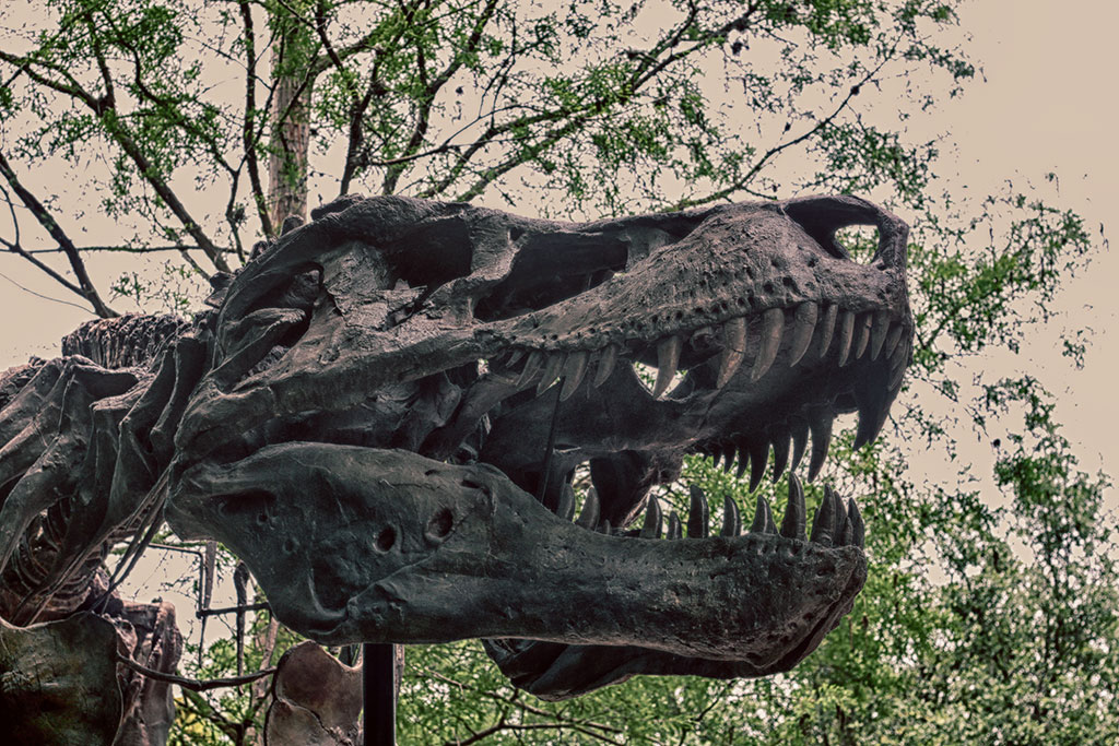 Um fossil de Dinossauro em alusão à atração DINOSAUR e a área DinoLand U.S.A, no parque Disney's Animal Kingdom